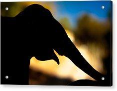 Elephant Silhouette Acrylic Print
