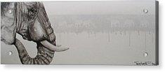 Elephant Tears Acrylic Print