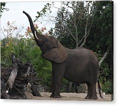 Acrylic Print featuring the photograph Elephant Time by Vadim Levin