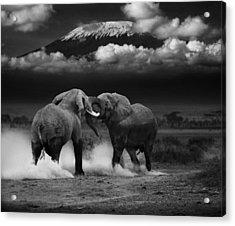 Elephant Tussle Acrylic Print
