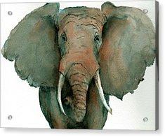 Elephant Up Close Acrylic Print