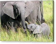 Elephants - Little Sister Acrylic Print by Nancy D Hall