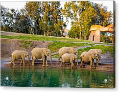 Acrylic Print featuring the photograph Elephants Are Family by April Reppucci