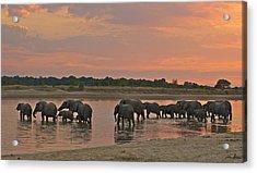 Elephants At Dusk Acrylic Print by Johan Elzenga