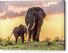 Elephants At Sunset Acrylic Print by Janis Knight