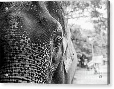 Acrylic Print featuring the photograph Elephant's Eye by Dean Harte