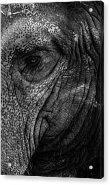 Elephants Eye Acrylic Print