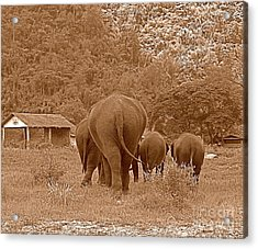 Acrylic Print featuring the photograph Elephants II by Louise Fahy