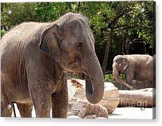 Elephants Acrylic Print by Jeannie Burleson