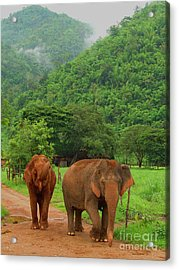 Acrylic Print featuring the photograph Elephants by Louise Fahy