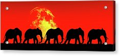 Elephants Walk In The Red Sky Acrylic Print by Jan Keteleer