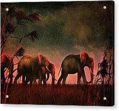 Elephants Walking Together Acrylic Print