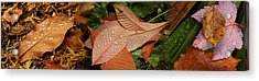 Elevated View Of Raindrops On Leaves Acrylic Print by Panoramic Images