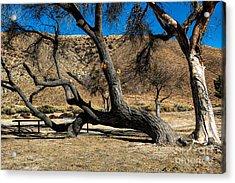 Elizabeth Lake Tree Acrylic Print