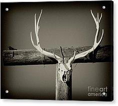 Elk And Blackbird Ranch Gate Acrylic Print by Gus McCrea