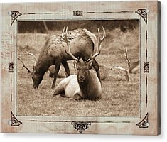 Acrylic Print featuring the photograph Elk by Athala Carole Bruckner