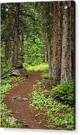 Elk Camp Trail Acrylic Print by Adam Pender