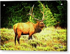 Elk Impression Acrylic Print by Todd Bielby
