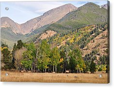 Elk In The Rockies Acrylic Print