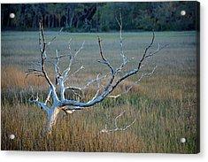 Elk-like Tree On Jekyll Island Acrylic Print by Bruce Gourley