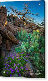 Elk Mountain Flowers Acrylic Print by Inge Johnsson