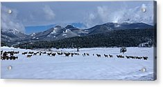 Elk On A Snow Covered Moraine Acrylic Print
