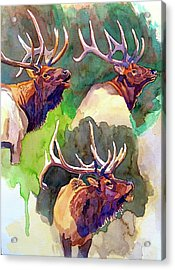 Elk Studies Acrylic Print