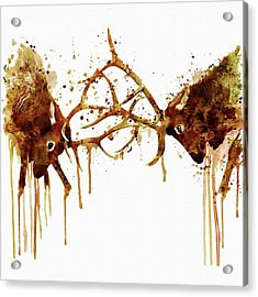 Elks Fight Acrylic Print