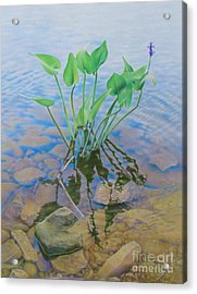 Ellie's Touch Acrylic Print by Pamela Clements