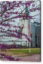 Ellsworth Blooms Acrylic Print by Darren White