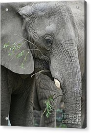 Elly At Lunch Acrylic Print by Karol Livote