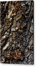 Elm Tree Bark Pattern Acrylic Print by Frank Tschakert