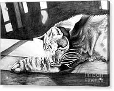 Elmer The Cat Acrylic Print by Genevieve Esson