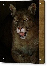 Elmira's Panther Acrylic Print by Kimberly Camacho