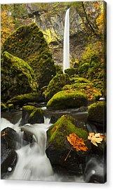 Elowah Autumn Acrylic Print by Mike  Dawson
