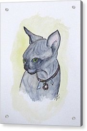 Else The Sphynx Kitten Acrylic Print
