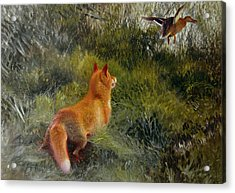 Eluding The Fox Acrylic Print