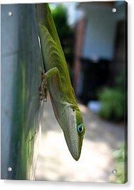 Emaciated Lizard Acrylic Print by Lindsey Orlando