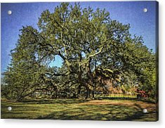 Emancipation Oak Tree Acrylic Print