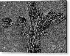 Embossed Tulip Abstract Acrylic Print by Marsha Heiken
