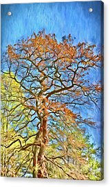 Acrylic Print featuring the photograph Embraced By Autumn by Kerri Farley