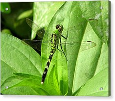 Acrylic Print featuring the photograph Emerald Dragonfly by David Dunham