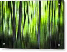 Green Forest - North Carolina Acrylic Print