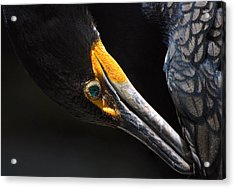 Emerald Eyes Acrylic Print