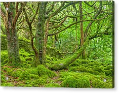 Emerald Forest Acrylic Print by Nicolas Raymond