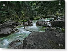 Acrylic Print featuring the photograph Emerald Forest by Tim Reaves