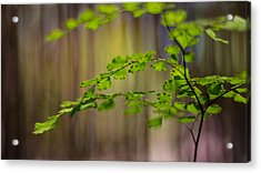 Acrylic Print featuring the photograph Emerald by Tim Nichols