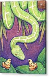 Emerald Tree Boa Acrylic Print by Amy S Turner
