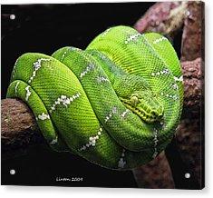 Emerald Tree Snake Acrylic Print