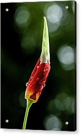 Acrylic Print featuring the photograph Emerging by Fred Denner